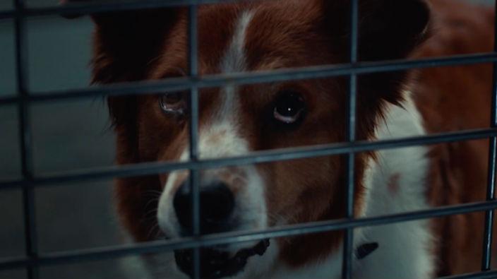 Anuncio por la adopción de mascotas cambia roles de humanos y perros