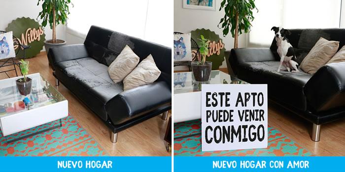 Campaña para que perritos encuentren un hogar #HogarConPerro